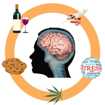 Brain surrounded by alcohol, drugs, stress and chocolate cookies.